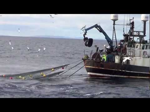FISHING VESSEL LAPWING PD972 HAULING HIS NET