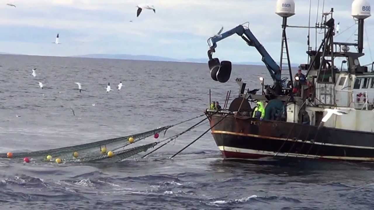 Fishing vessel lapwing pd972 hauling his net youtube for How to ship fish