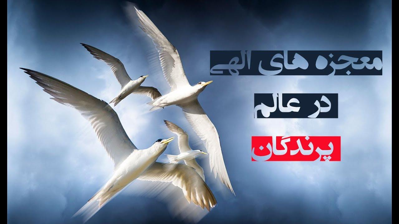 معجزه های الهی در عالم پرندگان | المفلحون HD