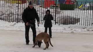 Развитие и разнообразие обязательное условие обучения, дрессировки собаки