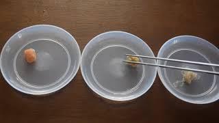 Mrożone pokarmy dla ryb część 2 #58. AkwaGadka