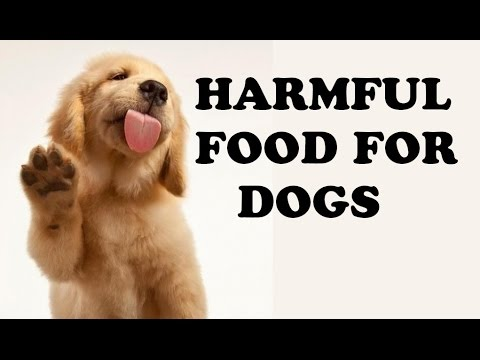 Harmful Food For Dogs