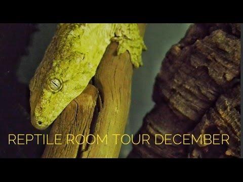 Reptile Room Tour December 2016