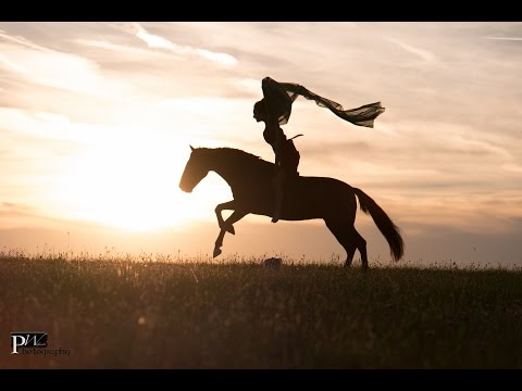 ~ The Horse ~