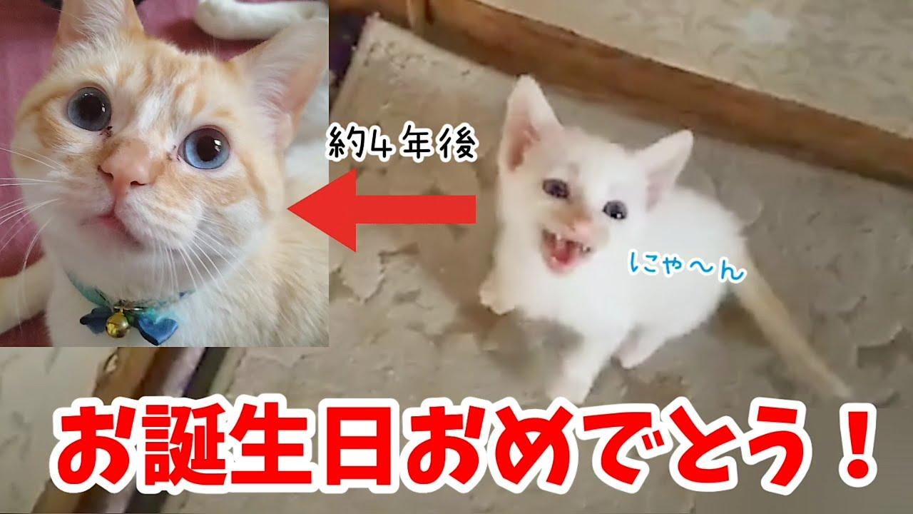 【お誕生日】ミルぽんが4歳になりました! 子猫がでっかい猫に成長しました。 20210612、カラス&四つ足カルテット