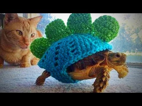 Funny Tortoise 🐢 Funny and Cute Tortoise (Part 1) [Funny Pets]