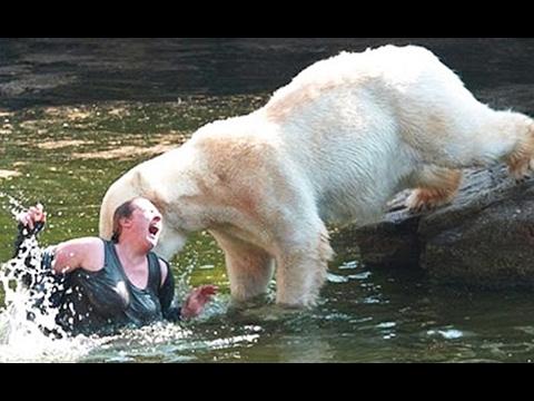 Top 10 personas que cayeron en recintos con animales salvajes youtube - Animales con personas apareandose ...
