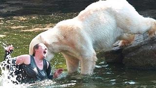 TOP 10 Personas Que Cayeron En Recintos Con Animales Salvajes