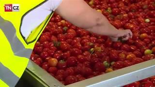 Jak se z rajčete stane kečup