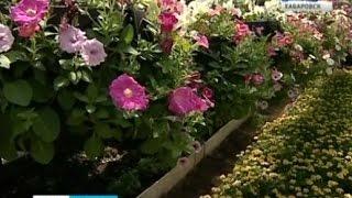 Вести-Хабаровск. Посадка цветов(Ко дню рождения Хабаровска - первые цветы появились на клумбах. У Городского дворца культуры, а также на..., 2016-05-28T07:16:24.000Z)