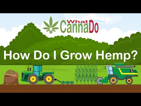 How to Grow Hemp? From Seed Sourcing to Harvest