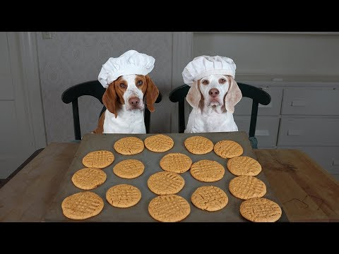 Dogs Make Peanut Butter Cookies: Funny Dogs Maymo, Potpie & Penny
