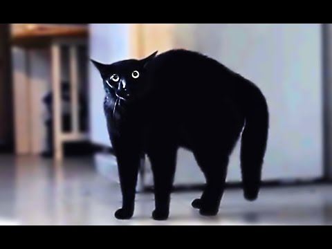 Scared cats compilation Part 1