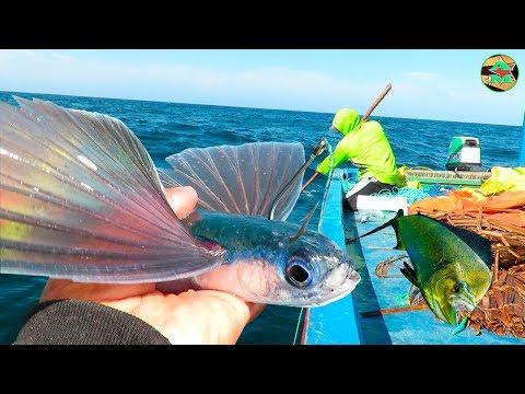 PESCANDO AL PEZ VOLADOR Para La PESCA DE PERICOS DORADOS - Pesca En Alta Mar
