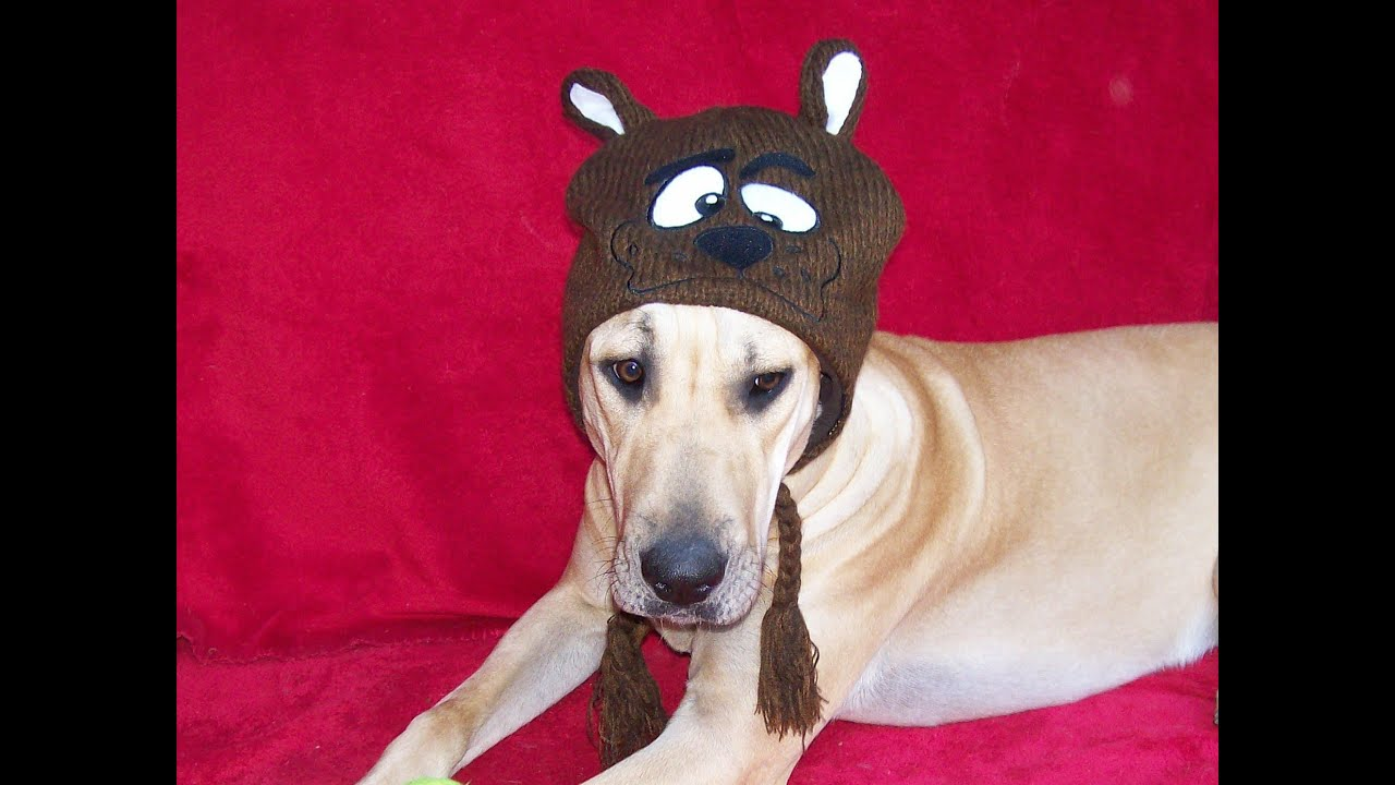 b0272de3742 Big Dogs in Winter Hats   Scarves - Christmas Holiday Photo Shoot ...