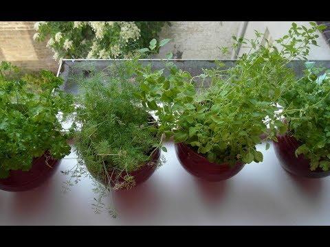 Вопрос: Для светлых прохладных комнат какие растения подойдут?