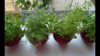ЛУЧШИЕ растения для ХОЛОДНОЙ СЕВЕРНОЙ комнаты