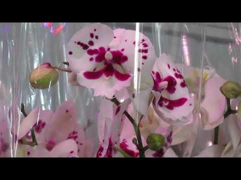 Новый завоз орхидей от 7.04.20г.
