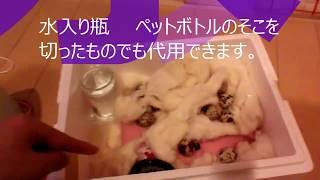 手作りのウズラ卵ふ化器の紹介動画です。ちなみに箱の温度は38度で、湿...