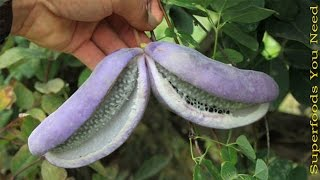 Top 10 Tropical Fruits You've Never Heard Of That You Didn't Know About