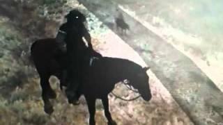 Das fliegende Pferd aus Red Dead Redemption
