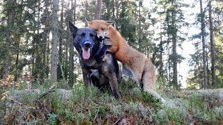 Мир животных - больше, чем фото
