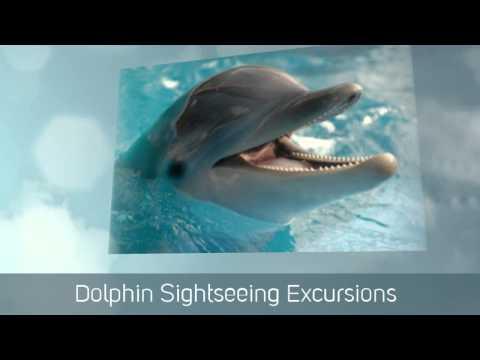 Panama City Tours - Shell Island Tours - Dolphin Tours - Paradise Adventures