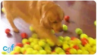 Best Dog Birthday Ever | All The Balls