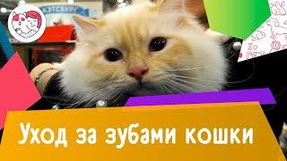 4 правила ухода за зубами кошки