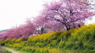一葉 - 桜の園