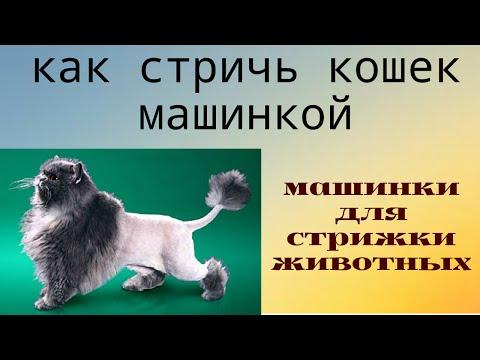 ✂✂Как стричь кошек #машинкой 🐱#груминг Дома!