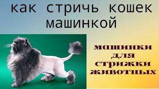 ✂✂Как стричь кошек #машинкой 🐱#груминг Дома!(В видео показано, как стричь кошку под машинку. Перед стрижкой кошке стригут когти, чтобы не поцарапала..., 2016-06-04T18:00:01.000Z)