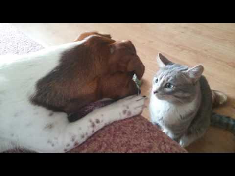 кот знакомится с кошкой