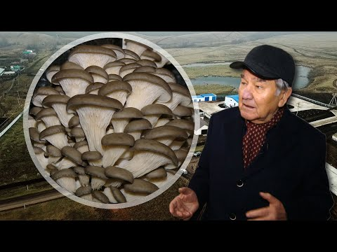Как соратник Шаймиева построил грибной бизнес на селе