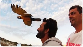Macaw Bird Follows Owner | Real Life Assassin's Creed