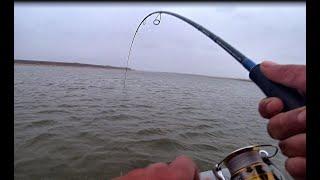 Килограммовый окунь судаки щука язь Жирный вечер по рыбе был Рыбалка с прошлого сезона