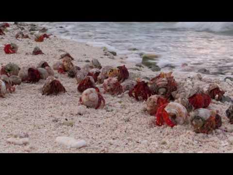 Wake Island: Where America