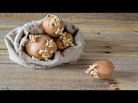 Песочное тесто: рецепт для пирога классический, шоколадно-ореховый — ингредиенты с пошаговой инструкцией