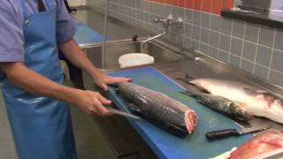 hoe fileer je een vis