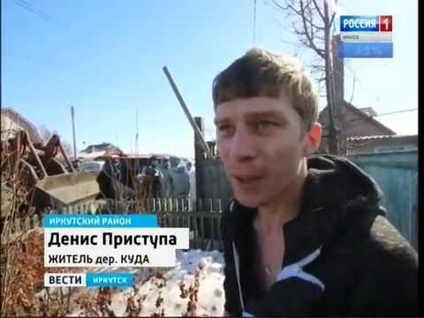 Ущерб от африканской чумы в Иркутском районе предварительно оценивается в 10 млн рублей