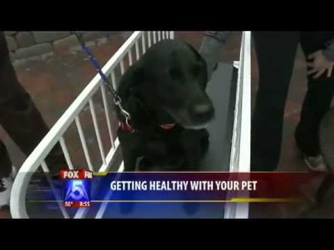 Getting Healthy with your Pets featuring Go Pet treadmill