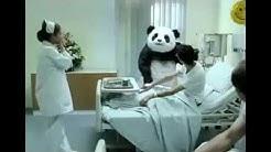 Top 7 sag niemals nein zu panda