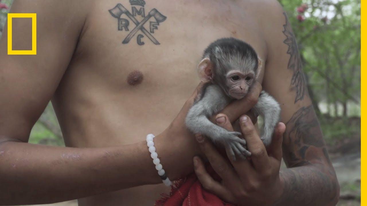 Sauvetage de Kate, un bébé singe Vervet