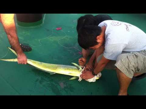 my fishing in angola