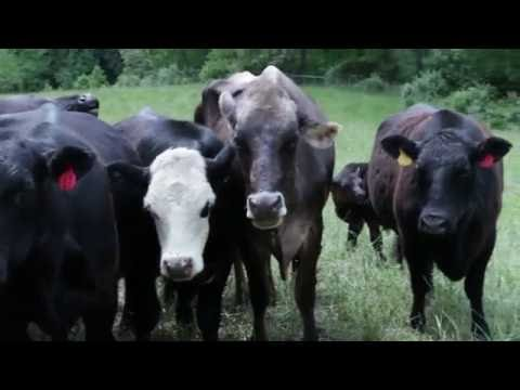 Radio Bristol Farm Report - Laughing Water Farm