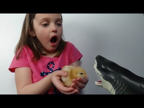 "Pet Shark Attacks Baby Chicks ""Annabelle & Victoria Save The Day"" Toy Freaks Poop"