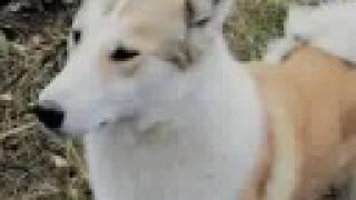 Speaking dog! / Говорящая собака!