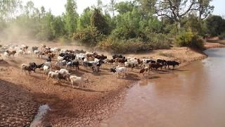 Une piste de transhumance intercommunale pour concilier agriculture et pastoralisme