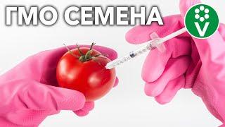 ВАС ОБМАНЫВАЮТ КАЖДЫЙ ДЕНЬ: правда о ГМО семенах и гибридах F1