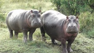 Don Munroe's Africa Adventure 2011